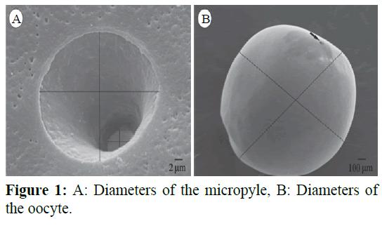 fisheriessciences-Diameters-micropyle
