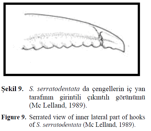 fisheriessciences-lateral-part